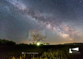 Milky Way over Dead Tree 1 copy logo-8592
