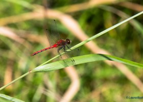 Dragon Fly-6844
